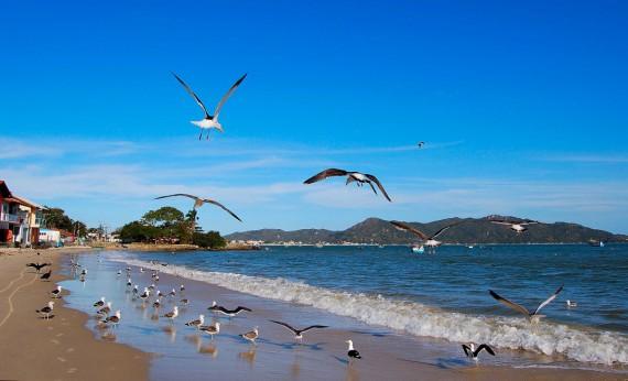 Praia Familiar Zimbros Bombinhas